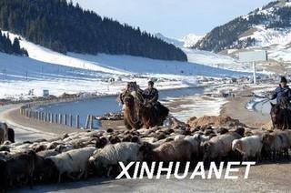 伊犁畜牧业正由大变强