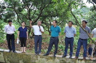 哈尔滨通河县县委书记刘长河调研检查大榛子种植工作进展情况和重点产业项目建设
