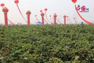 新乡封丘第四届树莓节6月15日开幕
