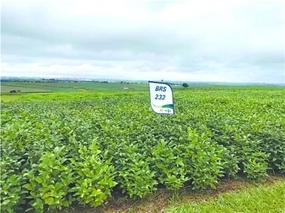 巴西牛油果出口量增长神速