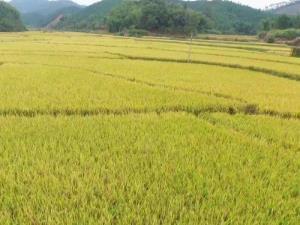 广西五举措严格保护永久基本农田