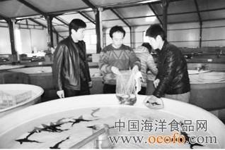 北京育鲟鱼苗种占全国七成以上