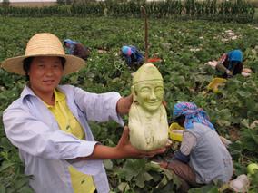 """甘肃省农科院肥药""""双减 """"技术 让春油菜迈出高效生产新步伐"""