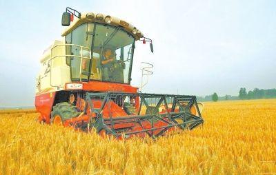 今年夏粮国家继续实行最低收购价政策