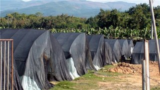 农业技术—极速5分排列3蔬菜遮阳网覆盖栽培技术