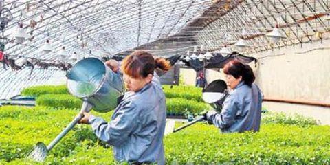 培育新型职业农民为乡村振兴提供人才支撑