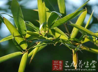 竹叶泻经汤的功效与作用