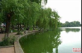 云南省弥渡县如何防治近期鲫鱼鱼病
