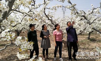 """河北省梨气象中心:当好鸭梨之乡""""守护人"""""""
