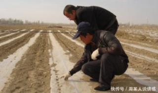 早春豇豆播种有什么良方吗?