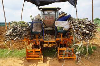 国家农业极速5分排列3部到勐海县调研甘蔗机械化生产