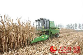 玉米种子挑选和浸种方法