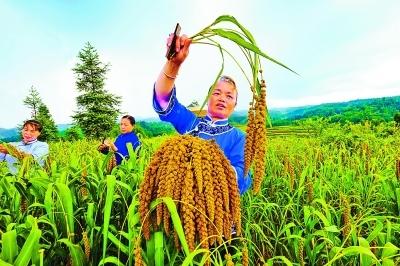 禄丰县:做大特色产业助农增收