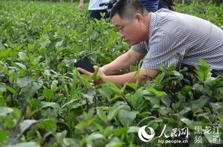 山西省蔬菜生产以茄果类和瓜菜类为主