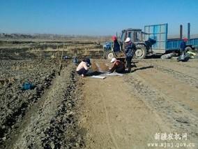 青海省三角城种羊场全面完成春播工作