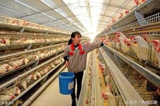 提高蛋壳质量的综合措施