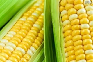 玉米价格创历史新高,后期走势如何?