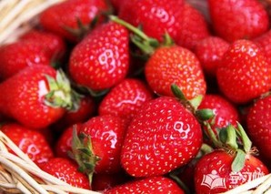 草莓什么时候种植最好?草莓最佳种植时间