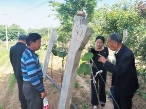 杨凌果农探索出猕猴桃冬季露地嫁接技术