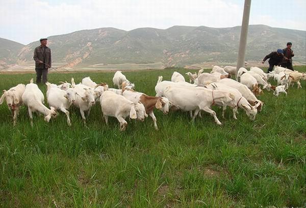 青海省农牧业丰产丰收已成定局