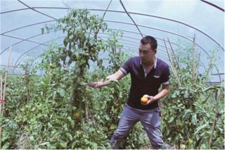重庆丰都:柠檬产业带领村民共同致富