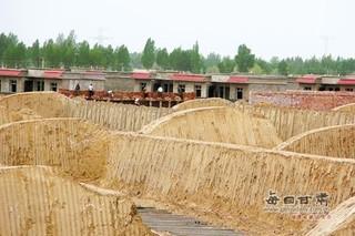 甘肃古浪:五个日光温室建设项目集中启动建设