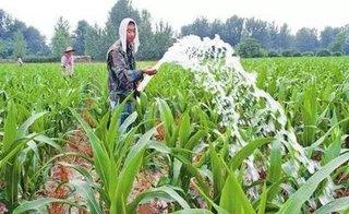 玉米高产灌溉要求