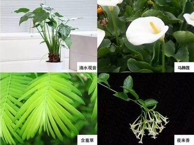 """4种植物是室内""""造氧机"""",养在室内空气清新"""