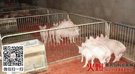 仔猪的饲养管理技术