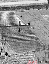成县索池镇大川村村民在铺地膜种植蔬菜