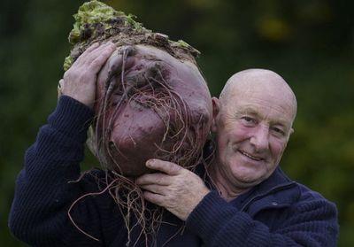国外巨型蔬菜挑战你的想象力