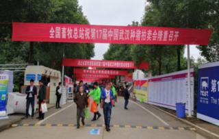 全国种猪大赛暨拍卖展销会在武汉举行