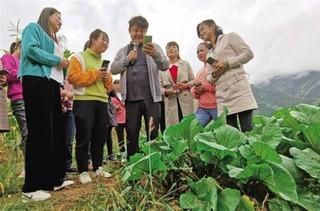 凤县:高山冷凉蔬菜喜获丰收村民笑开颜