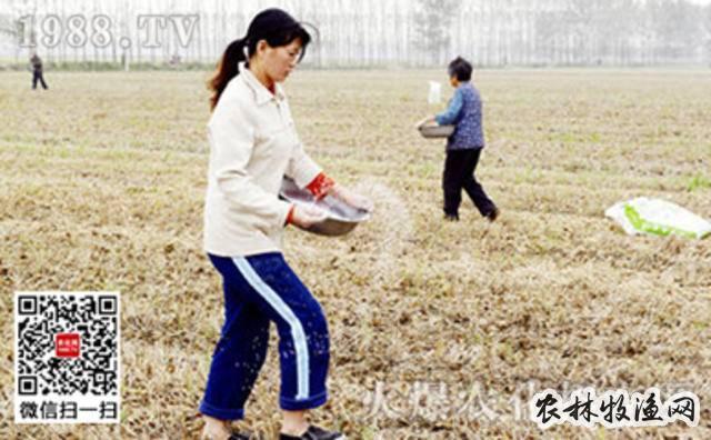 如何应对化肥使用过量