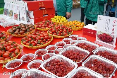 """大棚升级助农户种上""""高端""""西红柿"""
