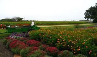 青浦绿色生态农业论坛聚焦现代、智慧、绿色发展理念