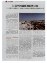 新疆农业再获丰收 粮食总产比2018年增加23万吨,棉花产业优势地位进一步巩固