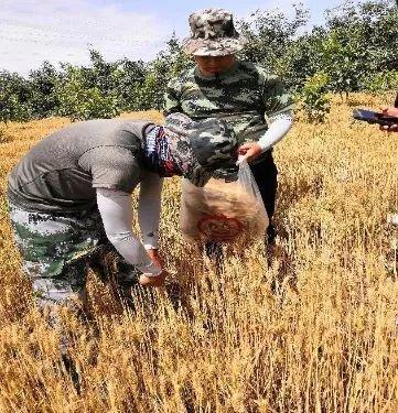 新疆农用地土壤环境总体优良