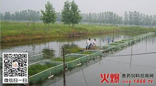 春季鱼塘施肥应适时适量