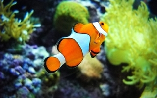 热带鱼的饲养管理