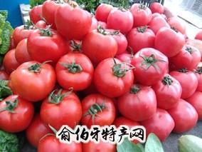 肃宁西红柿