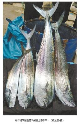 宁波宁海为港马鲛鱼捕捞护航