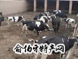南郑畜牧业