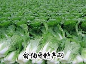 颍泉大白菜