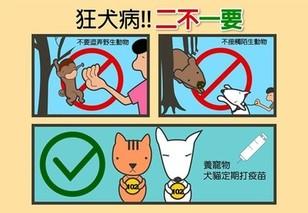 狂犬病的预防措施