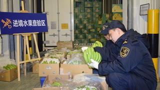 柬埔寨香蕉首次登陆上海
