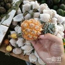 泰国小菠萝热销云南