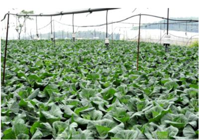 贵州部署蔬菜秋冬种生产工作