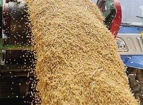 山东已有10市启动小麦*收购价收购