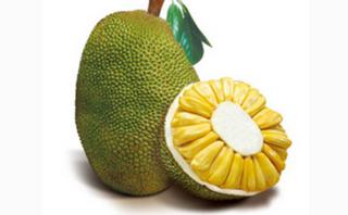 木菠萝的功效与作用